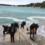 Održane Eko akcije čišćenja podmorja u Banjolama i Premanturi